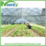 Fournisseur simple de Chambre verte de film plastique de tunnel de vente chaude pour culture de légumes