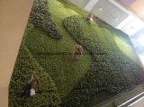 Revestimento da parede das plantas verdes