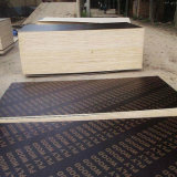 Fabricante de madeira compensada extravagante / Abacaxi / Birch / Bintangor / Contraplacado Okoume para fabricante de móveis