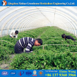 Low Cost High Quality Single Layer Tunnel Plastic Film Greenhouse