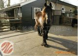Nattes en caoutchouc de cheval de vache, fournisseur bon marché stable de couvre-tapis de cheval antidérapage