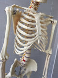 168cm menschliches skelettartiges Systems-medizinisches unterrichtendes Modell (R020103A)