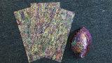 Ohrschnecken-Shell-Blatt AAA-Gradenew Seeland/Shell-Papier