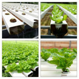 Casa verde agrícola hidropónica del Multi-Palmo de la Doble-Película de la alta calidad