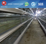 Цыплятина наслаивает оборудование для фермы цыпленка Afirca