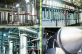 Extracto puro natural del Ginseng de la fuente del fabricante