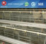 Attrezzature agricole della rete metallica del pollo per gli strati del pollo