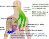 인간적인 호르몬 성장을%s 높은 순수성 주사 가능한 펩티드 Ghrp-2