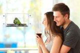 Alimentador de acrílico del pájaro con la taza fuerte estupenda de la succión