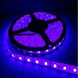 Luz de tira flexível nova 30LEDs/M do diodo emissor de luz do brilho elevado do projeto SMD5054