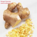 工場供給の自然なGingerols 10% 15% 20%のショウガのエキスの粉