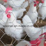 Fábrica sextavada do fio de galinha