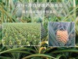 純粋で自然なまたは緑食糧かよい好みのパイナップルフルーツジュースの粉