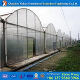 Il fornitore si è specializzato nella serra del film di materia plastica con il sistema idroponico