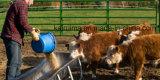 冷たい水溶性の高蛋白のミルク交換用工具か非酪農場のクリーム