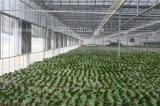 7 ventilador de ventilación del extractor del invernadero de las láminas 51000m3/H
