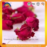 Chinesischer hybrider Tee mit den Rosen-Knospen und dem Rosen-Blumenblatt