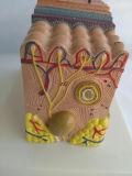 Modelo de demonstração anatômica médica de pele de alta qualidade