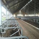 La mucca d'acciaio prefabbricata di Strucure di basso costo si è liberata di con l'alta qualità