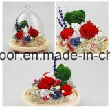 Decoración preservada de la Navidad de la flor fresca
