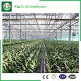 Serre di vetro di agricoltura/annuncio pubblicitario/giardino con il sistema di raffreddamento