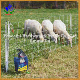 Rete fissa calda del bestiame Fence/Animal di vendita