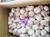 Aglio bianco normale 5.0-6.0cm del nuovo raccolto
