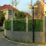 정원 담 싼 옥외 산울타리 회양목 인공적인 산울타리