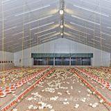 Matériel contrôlé de volaille d'environnement pour la Chambre de grilleur