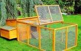 Cage de poulet (QZC1008)