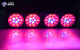 3W 칩 빨간 파란 이중 스펙트럼 LED 플랜트는 빛을 증가한다
