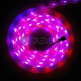 高品質装飾的な防水SMD5050デジタルLEDの滑走路端燈60LEDs/Mのセリウム、RoHS