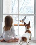 다람쥐 증거 아이를 위한 사나운 새 지류, 최고 외부 Windows에 의하여 거치되는 새 지류 & 고양이