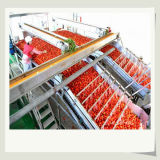 Baixos rendimentos da máquina pequena da pasta de tomate