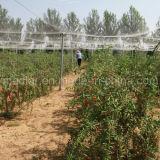 Het Organische Droge Goji Fruit van de mispel In het groot Goji