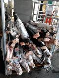 Bevroren Vissen voor Blauwe Haai