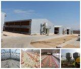 Ökonomisches Steel Material Chicken Farm mit Equipments