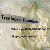 O esteróide Injectable da hormona da pureza elevada pulveriza a testosterona branca Enanthate