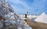 Il fornitore chimico fornisce il sale industriale del grezzo del sale