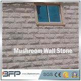 رماديّ فطر جدار [كلدّينغ] حجارة لأنّ منظر طبيعيّ زخرفة