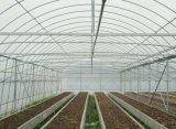 Парник тоннеля Multi-Пяди для растущий овоща и цветка