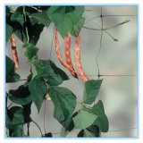 Réseau végétal de support de HDPE
