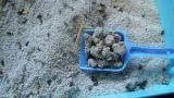 試供品が付いている競争価格のベントナイトのキティの砂