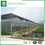 Landwirtschaft der Film-grünen Häuser für Gemüse/Blumen