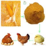 60% de farine de protéines de gluten au maïs Qualité supérieure et prix le plus bas