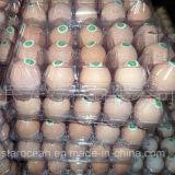 Verpakking van het Dienblad van de Eieren van het Geval van de Verpakking PVC/PP/Pet van Clamshell de Plastic