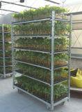 Multi Schicht-Metallwalzen-Blumen-Regal-Karren-Pflanzenlaufkatze