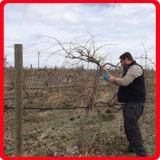 Tijeras Herramientas Koham 30cm Longitud Orchards el uso de energía de podar (KHAA10001-5)