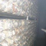 Essbare Pilze Dq-083, die Maschine befeuchten