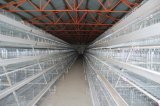 보일러와 층을%s 닭 감금소의 가금 농기구